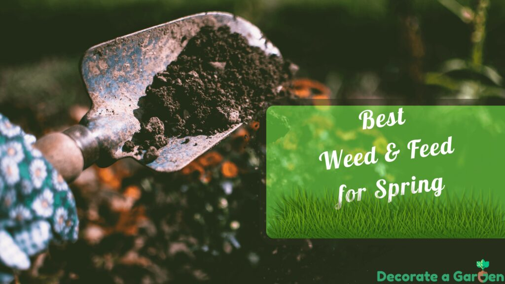 Best Weed and Feed for Spring