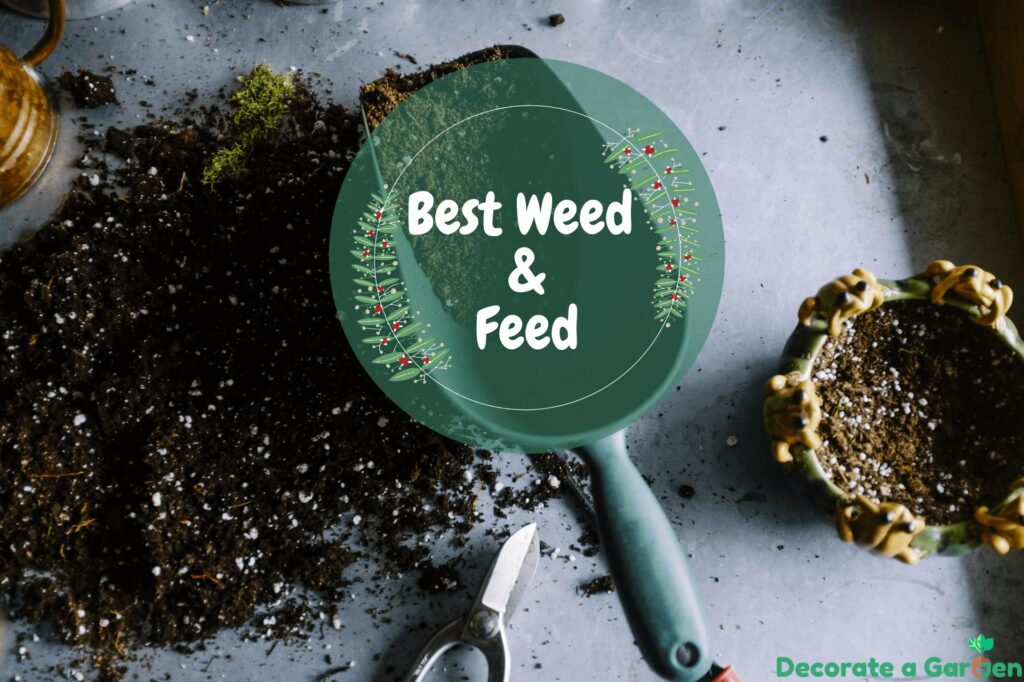 Best Weed and Feed