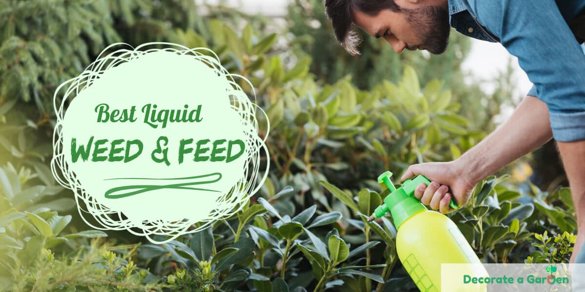 Best Liquid Weed and Feed
