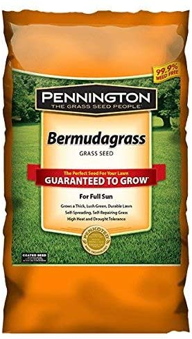 Pennington Bermuda Grass Seed – The Best for Durable and Fine-textured Turf