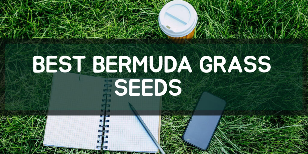 Best Bermuda Grass Seeds